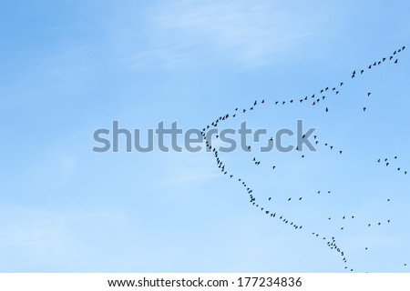 migration of birds to the north or to the south - stock photo