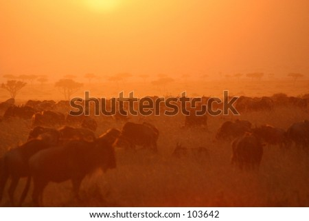 migration sunset  2,04 - stock photo