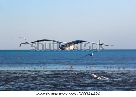 Migratory birds is flying over the sea in blue sky