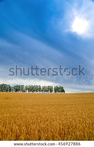 Mild Seven Hill is the famous place from a cigarette commercial for package label designs with row of larch trees - stock photo