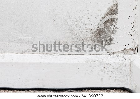 Mildew growth on an interior wall due to damp cold conditions - stock photo