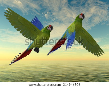 Military Macaws - The Military Macaw is a large parrot and is found in Mexico and South America. - stock photo