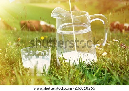 Milk and cows - stock photo