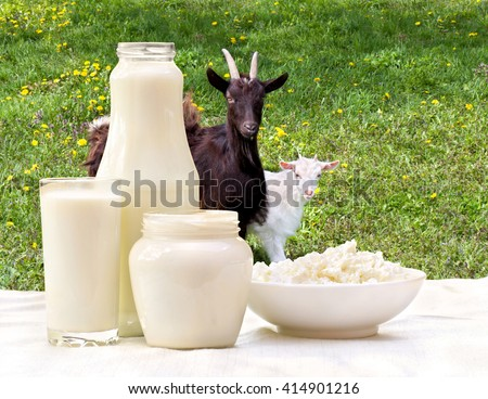 Milk, cottage cheese and sour cream on the background of meadows with goat and goatling - stock photo