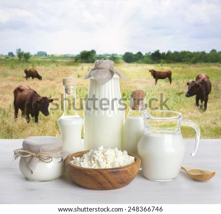 Milk on wooden table with cows on the background - stock photo