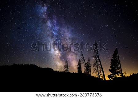 Milky Way with Pine Trees on Skyline - stock photo