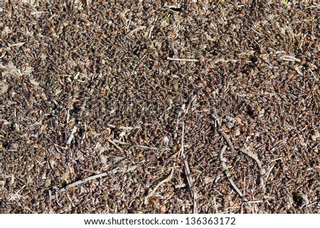 Million spring red ants build an anthill background. Sunny day - stock photo