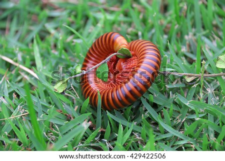 Millipede in the Grass selective focus - stock photo