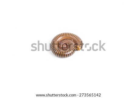 Millipede On white Backgrounds