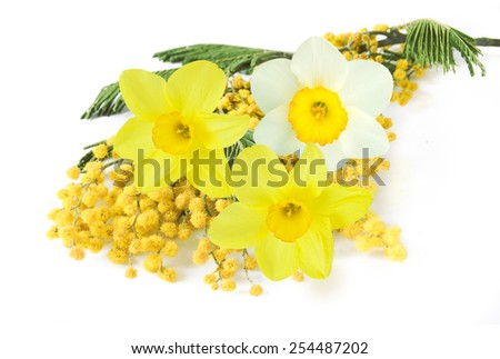 Mimosa and narcissus flowers bunch isolated on white background - stock photo