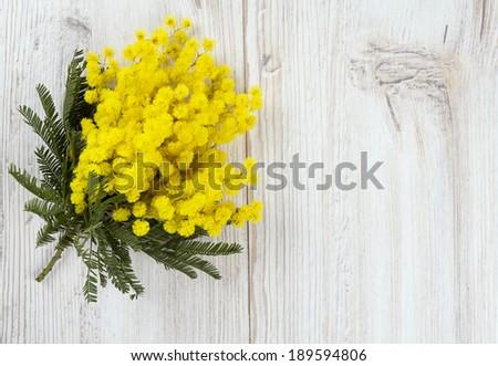 mimosa on white wooden background - stock photo