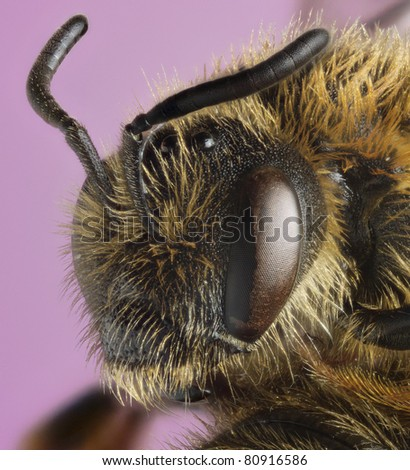 Miner Bee - stock photo