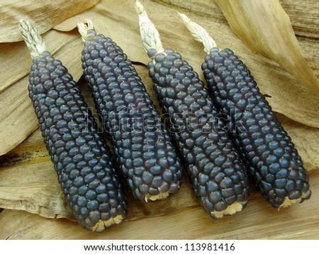mini blue corn on dry leaves background - stock photo