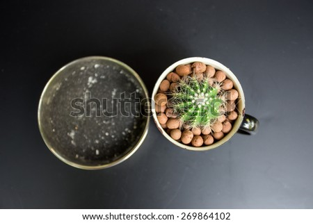 mini cactus in bowl on table in the kitchen - stock photo