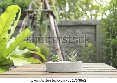 Mini cactus in stone pot, lath table in the garden, wood table, home garden, cactus, stone, pot, wooden furniture, wood, garden, green, outdoor, concrete, tree, nature, rustic, close up, leaves - stock photo