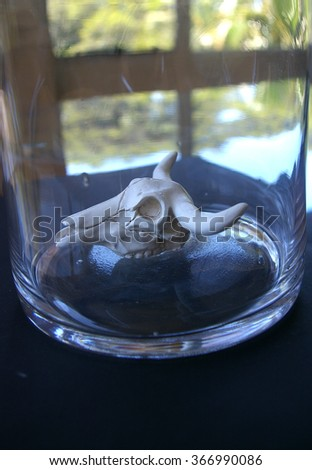 Mini cow skull in glass vase - stock photo