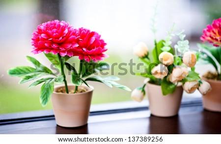 mini flower in house - stock photo