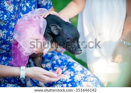 mini pig pet with  girls wearing beautiful dresses  - stock photo