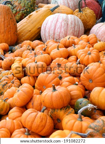 mini pumpkin and bumpy gourd at market place for Halloween and Thanksgiving - stock photo