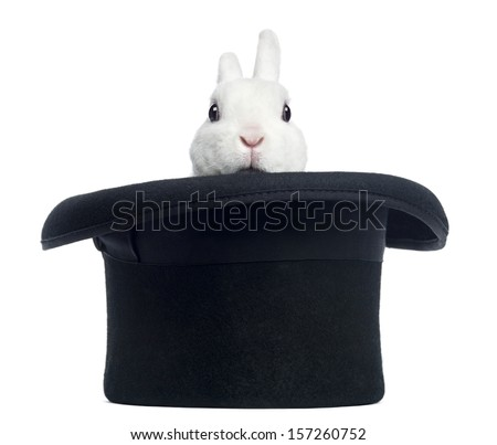 Mini rex rabbit appearing from a top hat, isolated on white - stock photo
