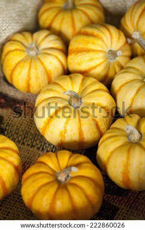 Miniature pumpkins - stock photo