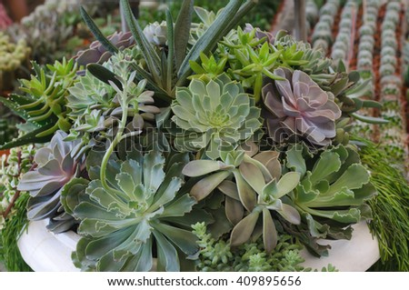 Miniature succulent plants decorated in white pot - stock photo