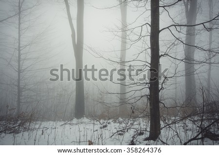 minimal winter forest landscape