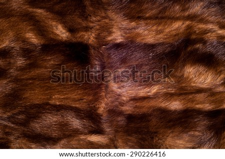 Mink fur animal . a small, semiaquatic, stoatlike carnivore native to North America and Eurasia. The American mink is widely farmed for its fur, - stock photo