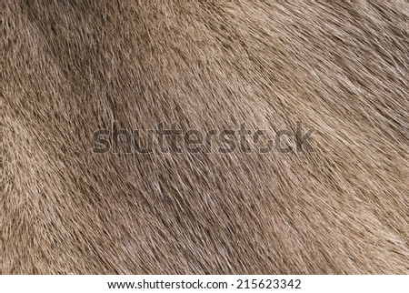 Mink fur for use as a background texture - stock photo
