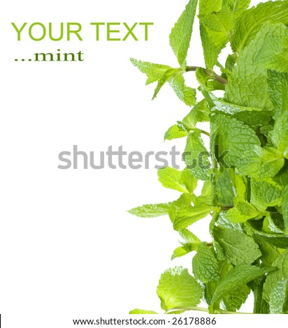 Mint Border - stock photo