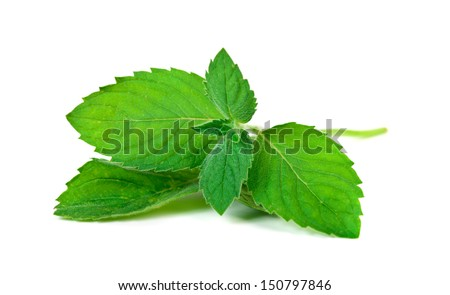 Mint leaf isolated  over white background  - stock photo