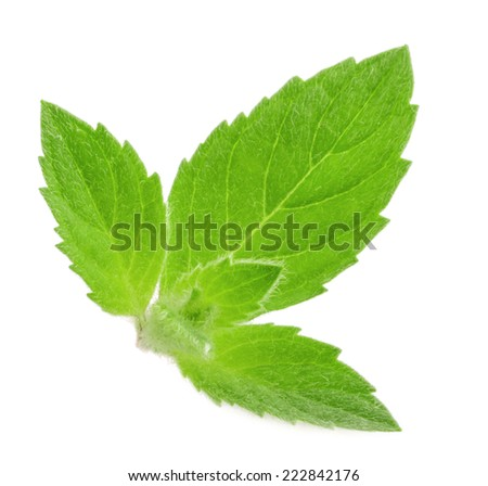mint leaves isolated - stock photo