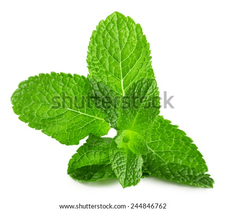 mint leaves isolated on the white background - stock photo