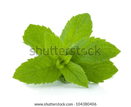 Mint leaves. Isolated on white background - stock photo