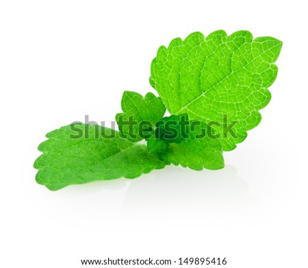 mint, lemon balm isolated on white background - stock photo