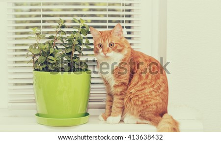 mint plant and cat - stock photo