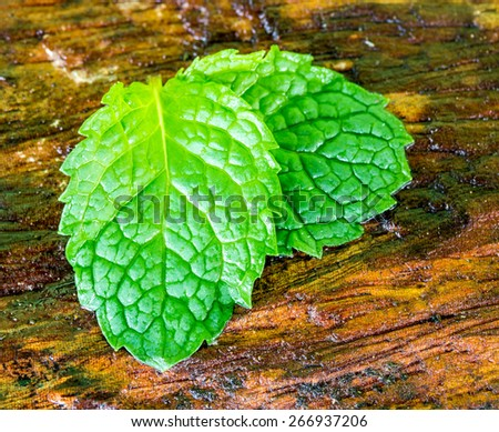 Mint wet leaves on the wooden floor. - stock photo