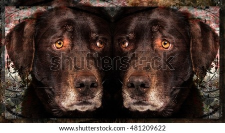 Mirrored Artistic Photo Collage Portrait of a Sensitive Chocolate Labrador Dog