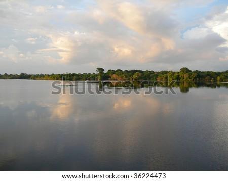 Mirrored rainforest line on the Rio Negro in the Amazon River basin, Brazil, South America - stock photo