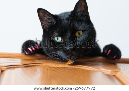 mischievous black cat looking at the camera shot with a shallow depth of field - stock photo