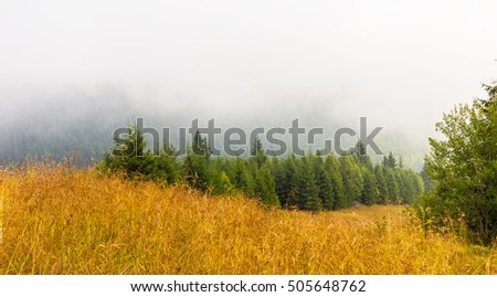 Mist and low clouds in a fir tree forest in the Alps