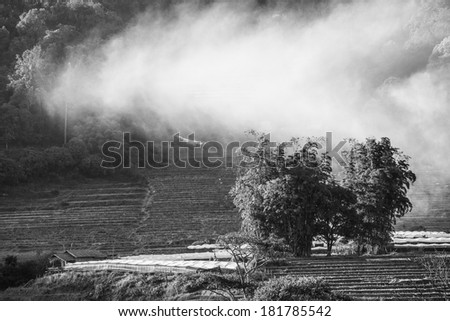 Mist and tree on mountains black and white