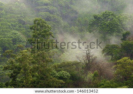 Mist drifts across coffee fields located in the central valley of Costa Rica. - stock photo