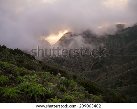 mist in the mountains of Tenerife