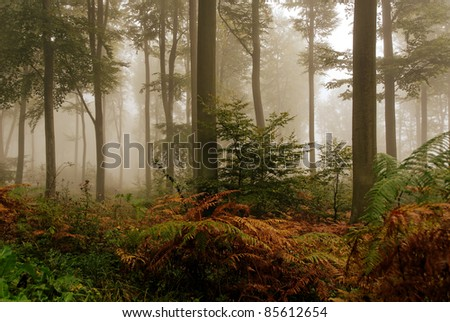 misted forest in fall season - stock photo