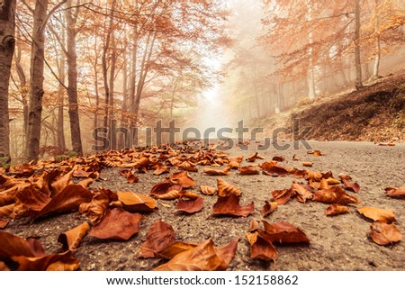 Misty and foggy road in autumn beech landscape. - stock photo