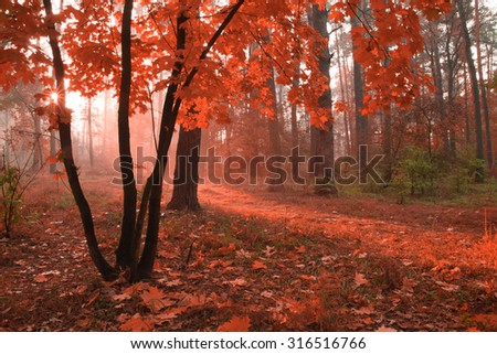 Misty autumn forest with red foliage on the trees. - stock photo