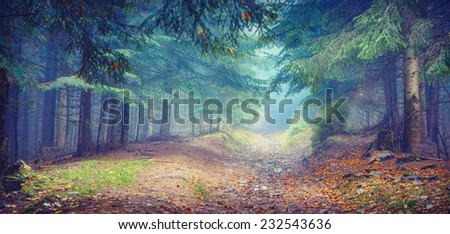 Misty Carpathian forest with old fir trees in a magic blue light. Vintage colors - stock photo