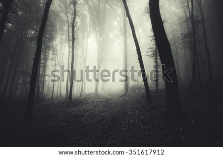 misty dark forest - stock photo