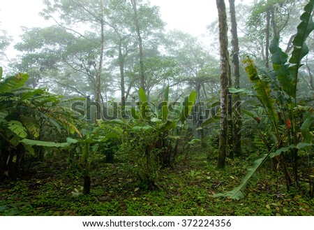 Misty, Dense, Lush Tropical Rain Forest in Costa Rica - stock photo